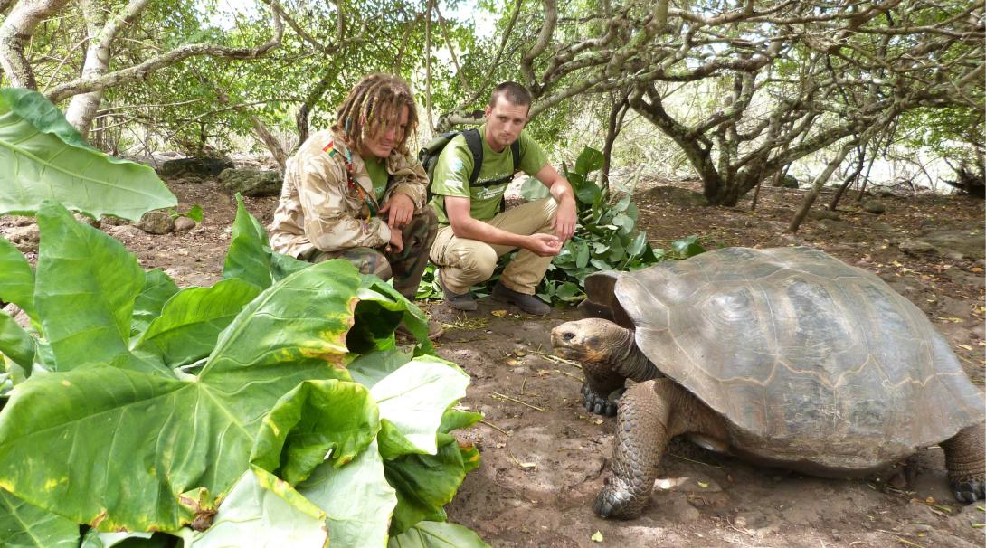 A pair of volunteers taking care of Giant Tortoise in our Conservation project in Galapagos.